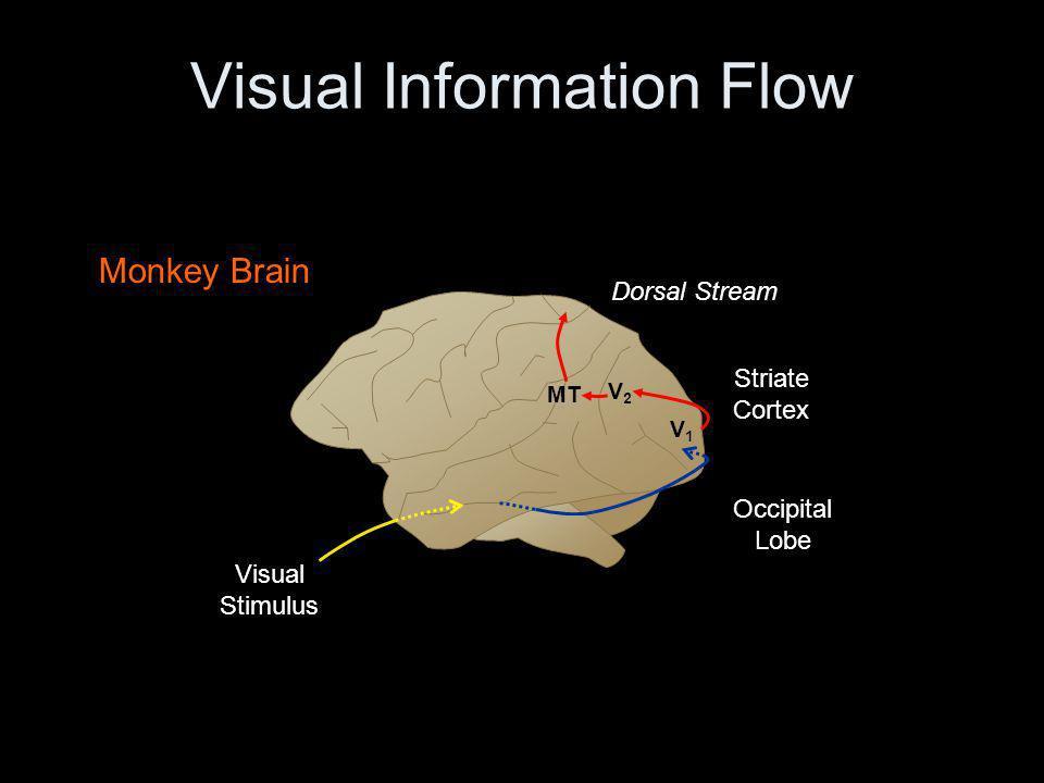 Background – Sensory Neurons Receptive Field 1 Neuron – Small amount of information Population Sensory Perception Preferred Stimuli