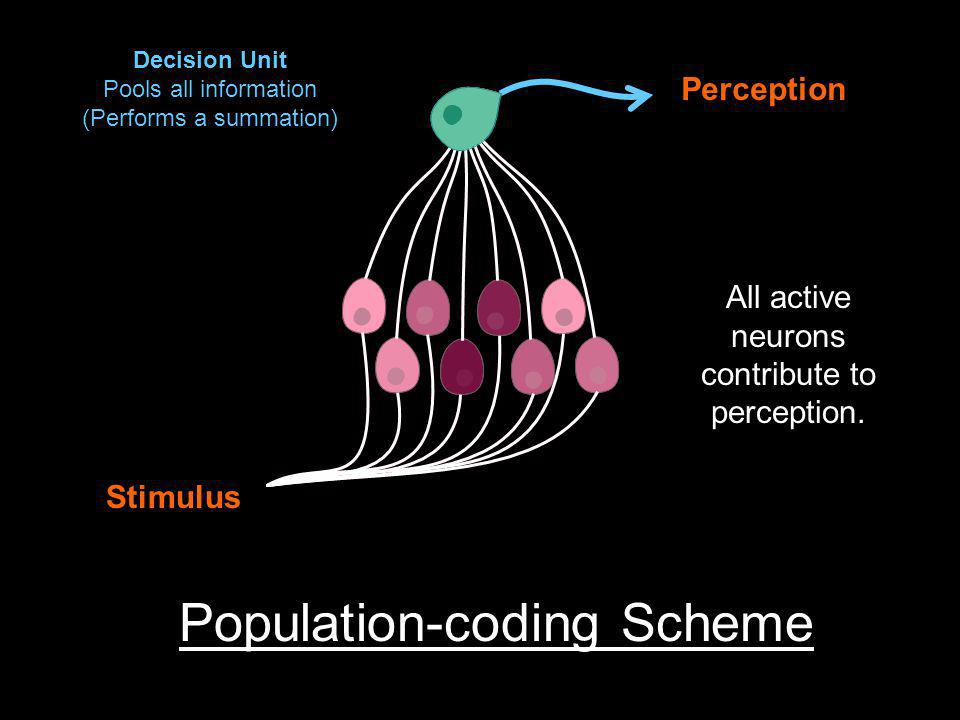Stimulus Perception Population-coding Scheme All active neurons contribute to perception.