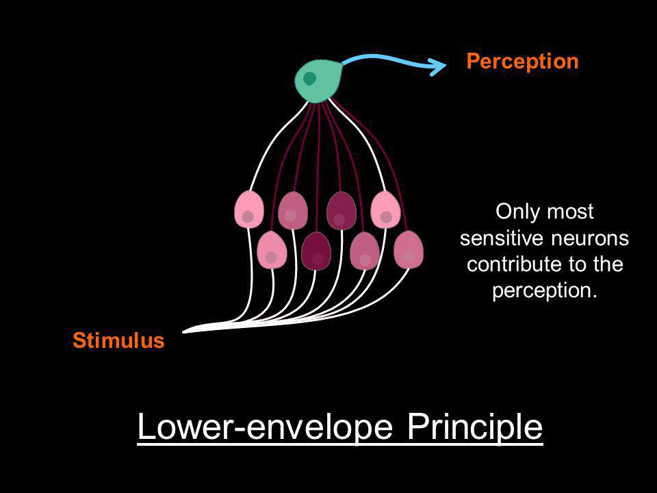 Stimulus Perception Lower-envelope Principle Only most sensitive neurons contribute to the perception.