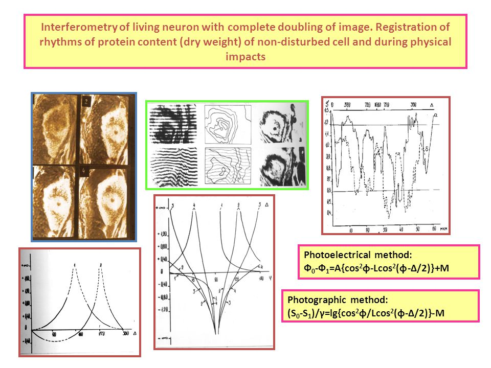 Interferometry of living neuron with complete doubling of image.