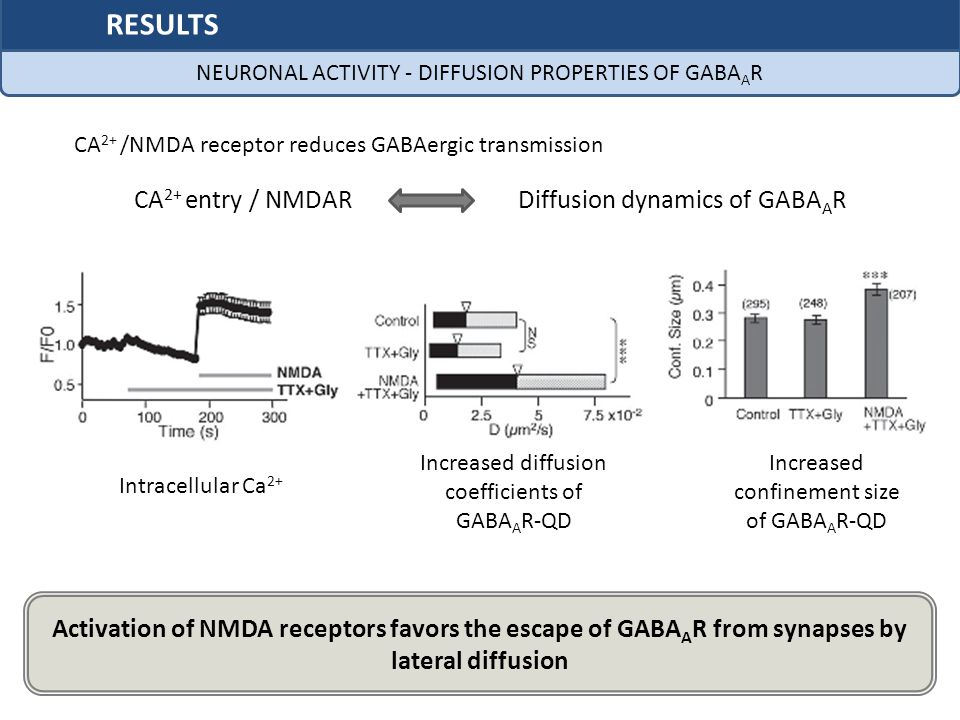 CA 2+ entry / NMDARDiffusion dynamics of GABA A R CA 2+ /NMDA receptor reduces GABAergic transmission Activation of NMDA receptors favors the escape of GABA A R from synapses by lateral diffusion Intracellular Ca 2+ Increased diffusion coefficients of GABA A R-QD Increased confinement size of GABA A R-QD NEURONAL ACTIVITY - DIFFUSION PROPERTIES OF GABA A R RESULTS