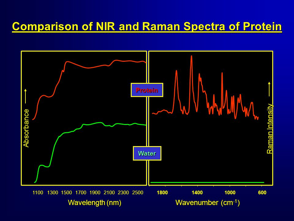 Wavenumber (cm -1 ) 180014001000600 11001300150017001900210023002500 Wavelength (nm) Absorbance Raman Intensity Protein Water Comparison of NIR and Raman Spectra of Protein