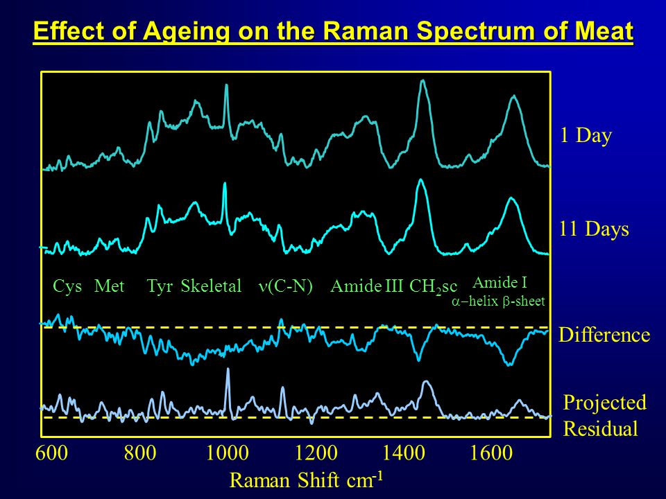 6001400120010008001600 Raman Shift cm -1 Effect of Ageing on the Raman Spectrum of Meat 1 Day Projected Residual 11 Days Difference TyrSkeletalMetCysCH 2 scAmide III (C-N) Amide I helix -sheet