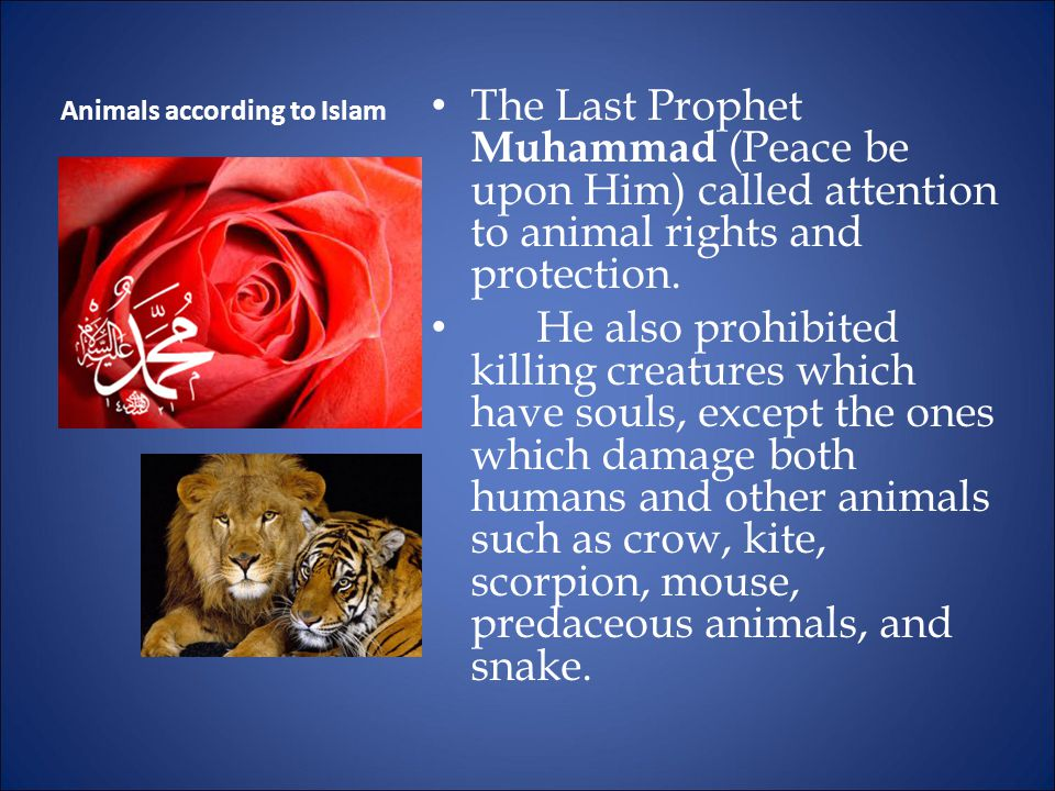 The Last Prophet Muhammad (Peace be upon Him) called attention to animal rights and protection.