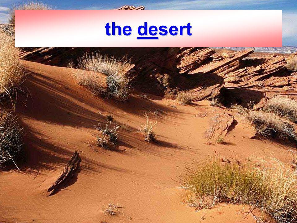 5 the desert