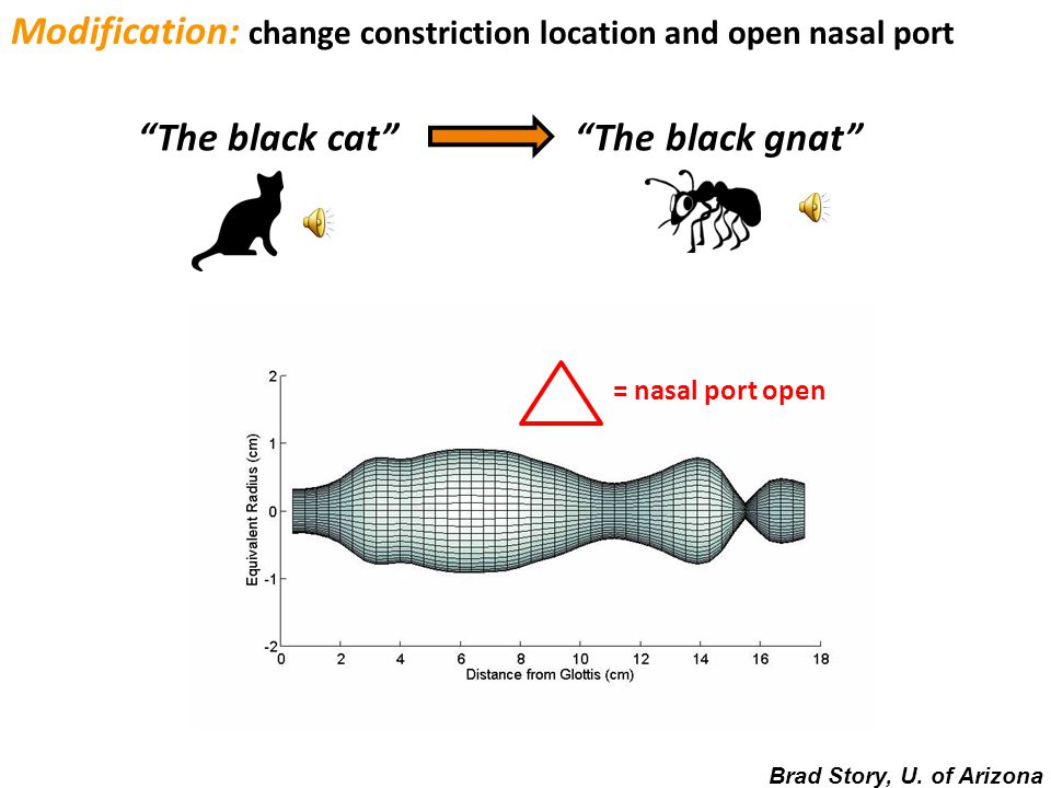 The black cat Modification: change constriction location The black bat Brad Story, U. of Arizona
