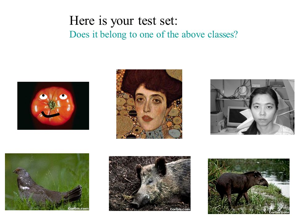 Here is your test set: Does it belong to one of the above classes?