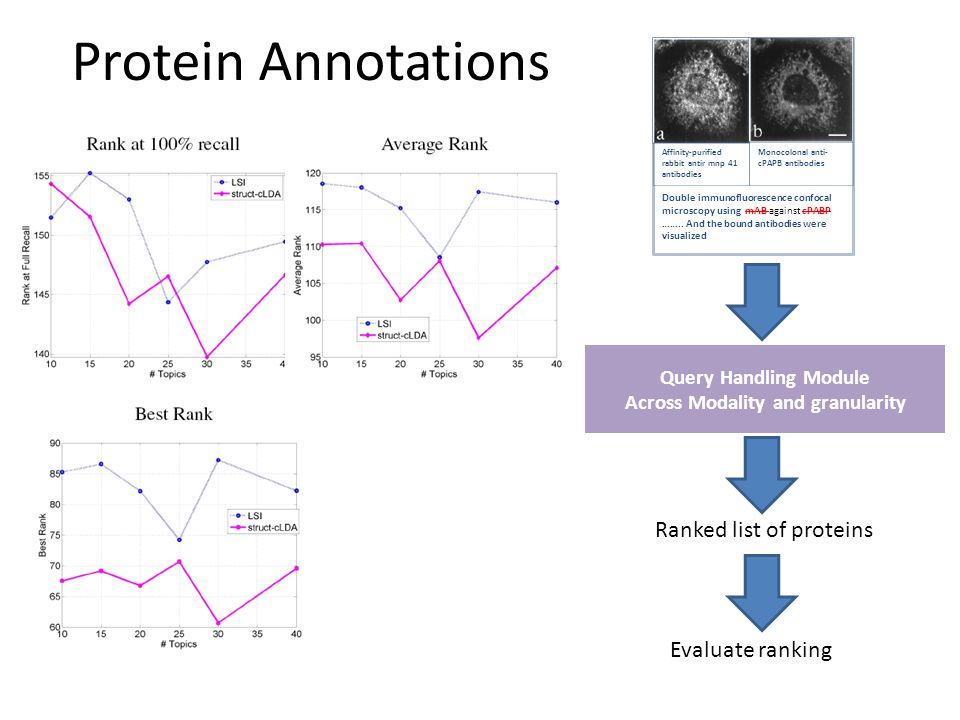 Protein Annotations Query Handling Module Across Modality and granularity Ranked list of proteins Evaluate ranking Affinity-purified rabbit antir mnp 41 antibodies Monocolonal anti- cPAPB antibodies Double immunofluorescence confocal microscopy using mAB against cPABP ……..