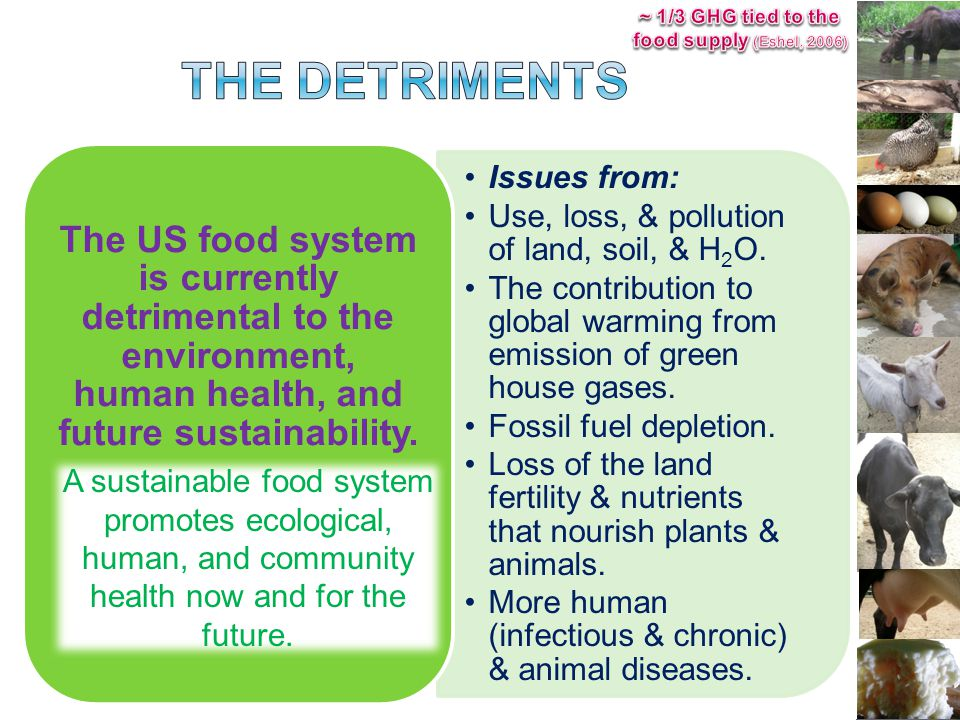 Issues from: Use, loss, & pollution of land, soil, & H 2 O.