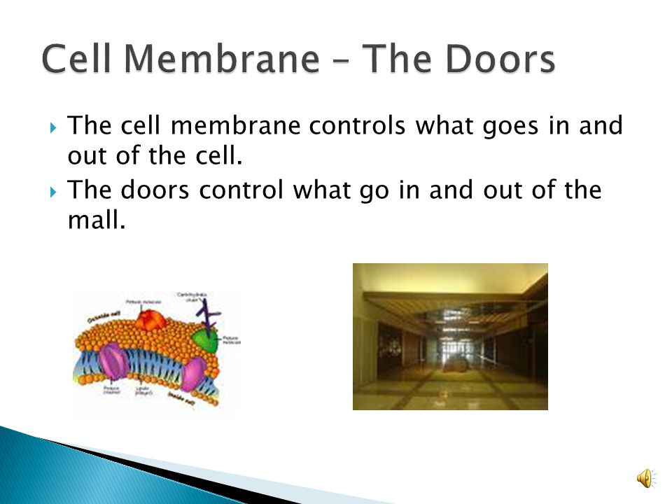The cell membrane controls what goes in and out of the cell.