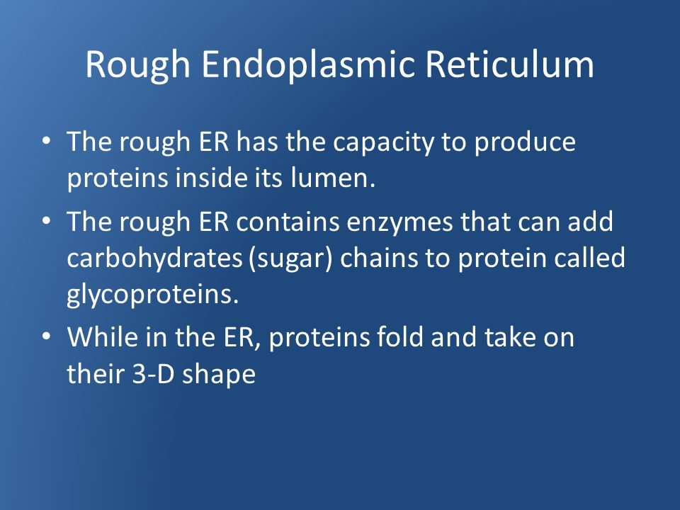 Rough Endoplasmic Reticulum The rough ER has the capacity to produce proteins inside its lumen.
