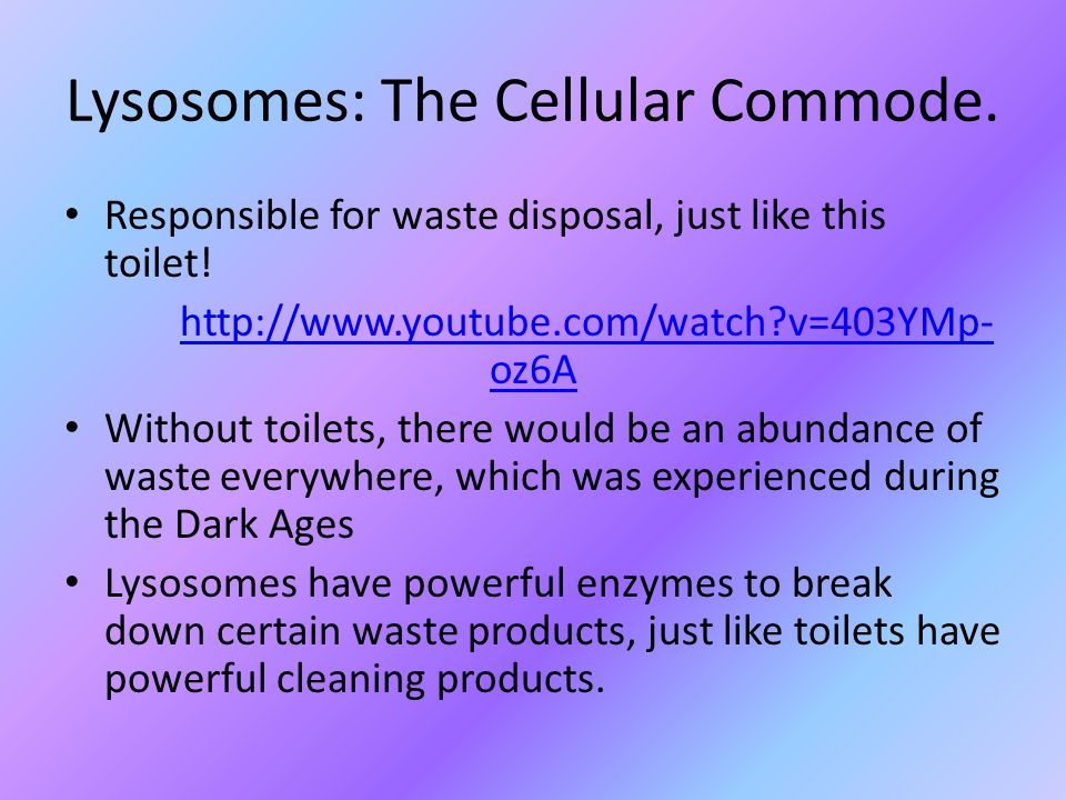 Lysosomes: The Cellular Commode. Responsible for waste disposal, just like this toilet.