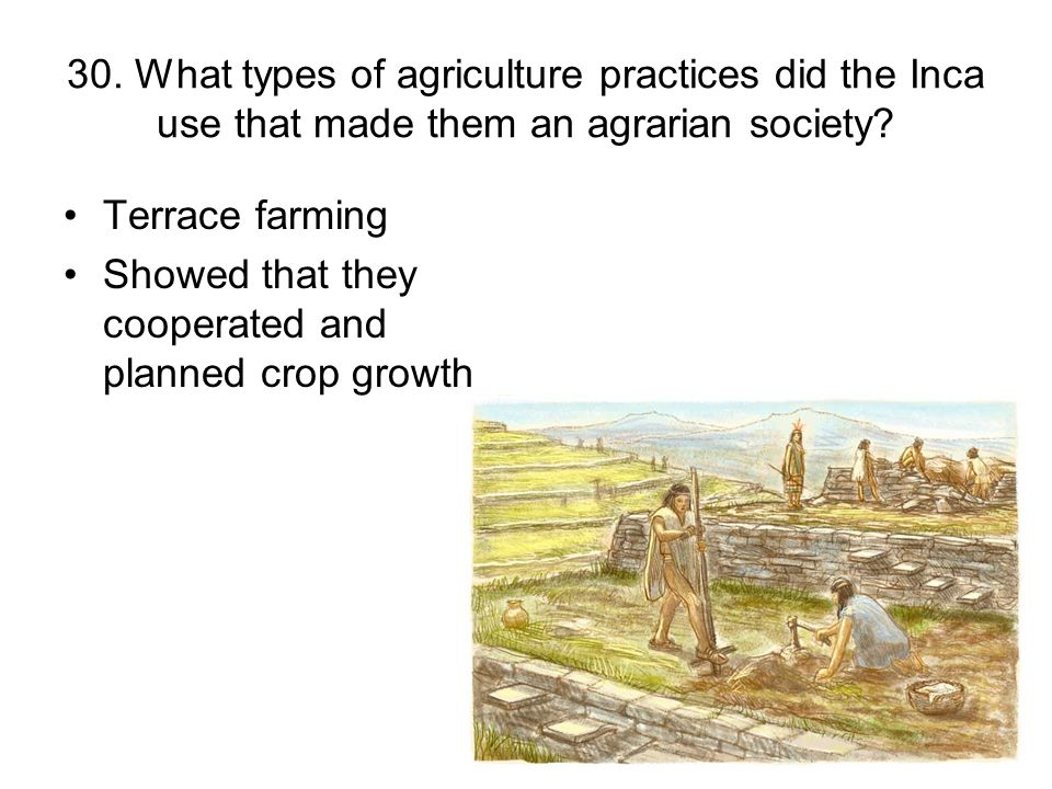 30. What types of agriculture practices did the Inca use that made them an agrarian society? Terrace farming Showed that they cooperated and planned c