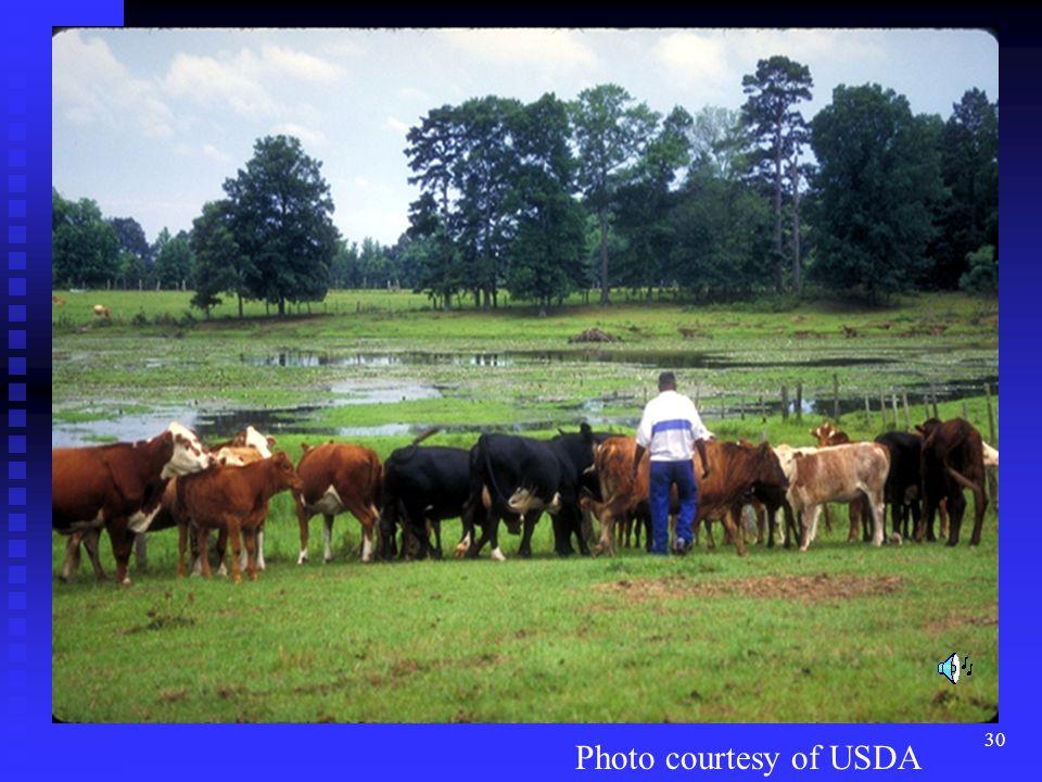 30 Photo courtesy of USDA
