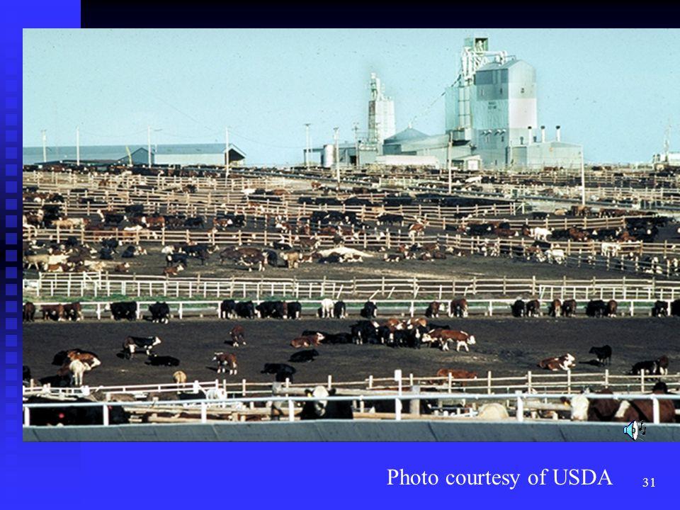 32 Photo courtesy of USDA
