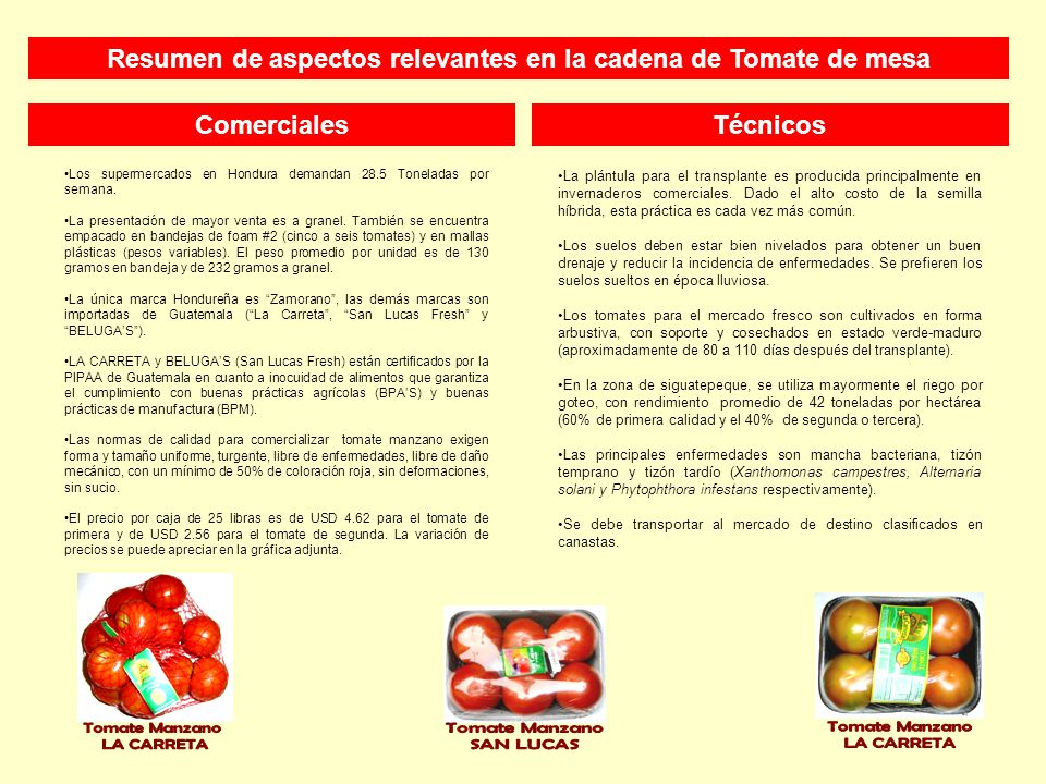 TécnicosComerciales La plántula para el transplante es producida principalmente en invernaderos comerciales.