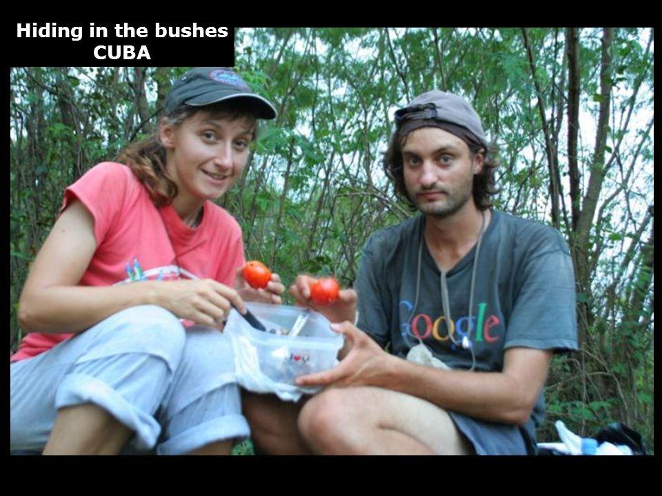Hiding in the bushes CUBA
