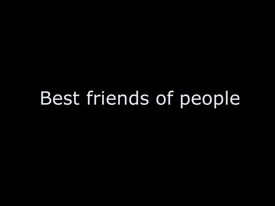 Best friends of people