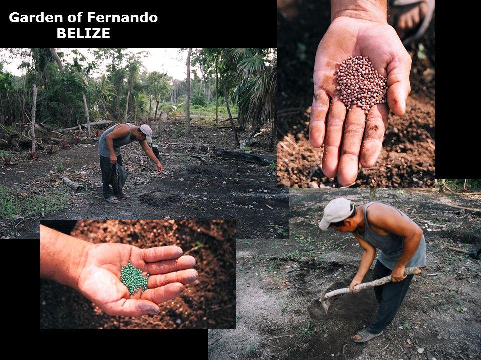 Garden of Fernando BELIZE
