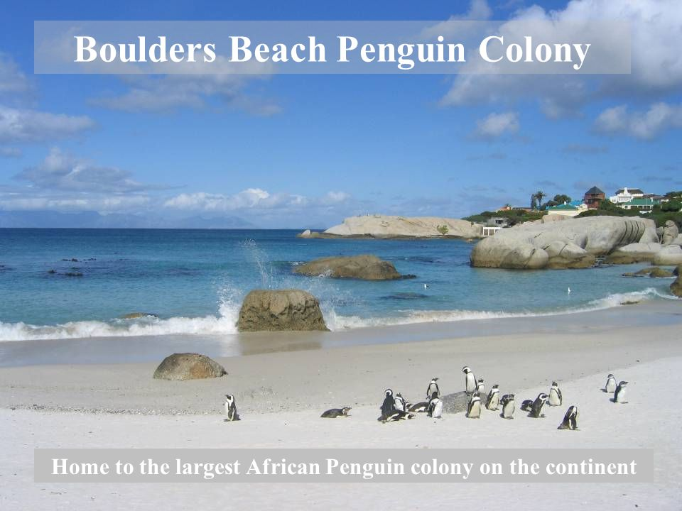 Boulders Beach Penguin Colony Home to the largest African Penguin colony on the continent