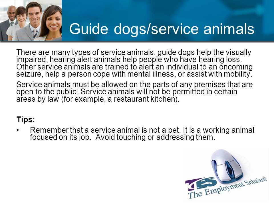 Guide dogs/service animals There are many types of service animals: guide dogs help the visually impaired, hearing alert animals help people who have hearing loss.