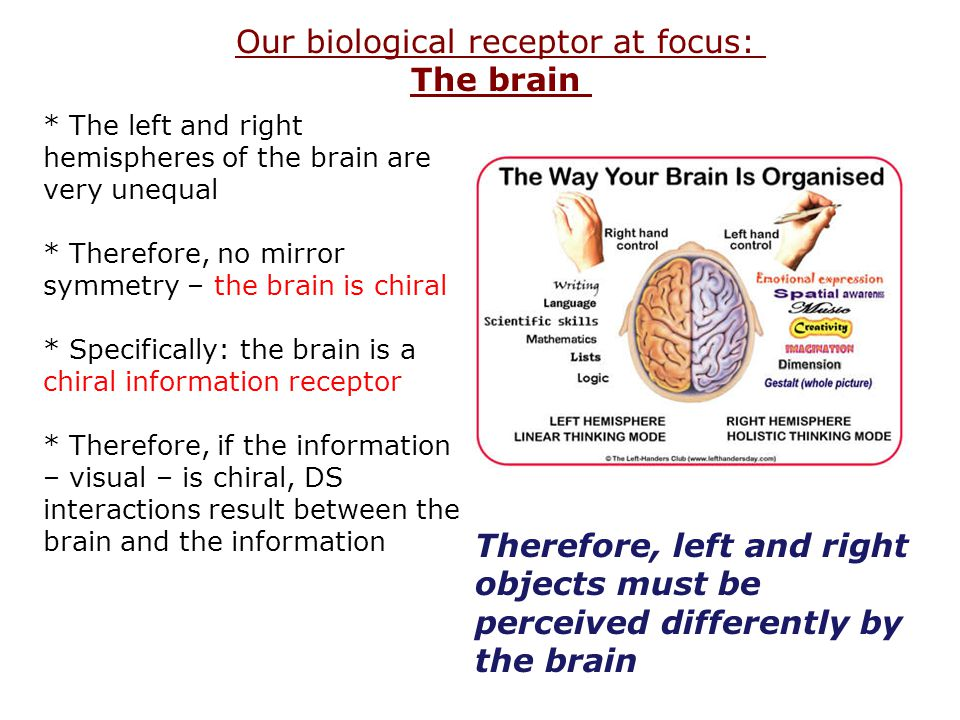 Our biological receptor at focus: The brain * The left and right hemispheres of the brain are very unequal * Therefore, no mirror symmetry – the brain