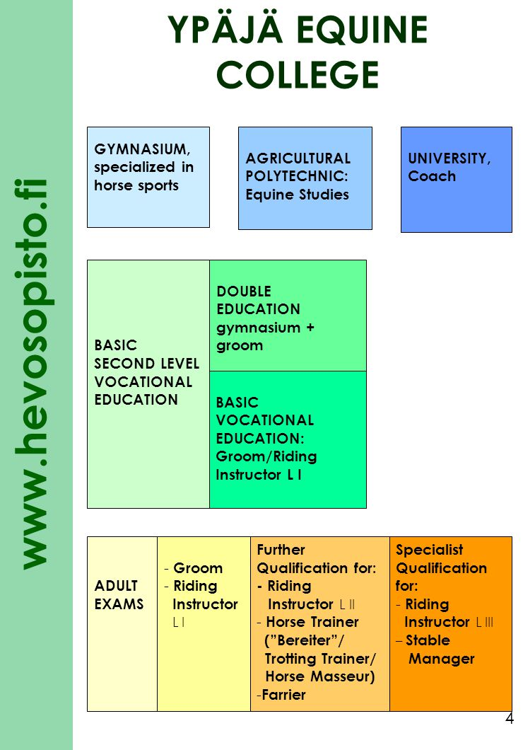www.hevosopisto.fi 5 Basic vocational education: choises of specialization in GROOM education YPÄJÄ EQUINE COLLEGE