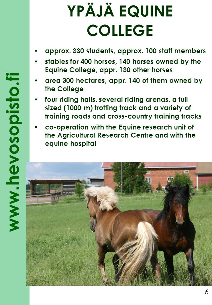 www.hevosopisto.fi 7 YPÄJÄ EQUINE COLLEGE SERVICES Vocational education further education short courses for professionals and leisure students competitions and events training young riding horses and trotters horse care and accommodation horse shoeing saddlery congress facilities, accommodation and restaurants riding school summer camps trail riding training center for the Finnish Equestrian Federation and private riders