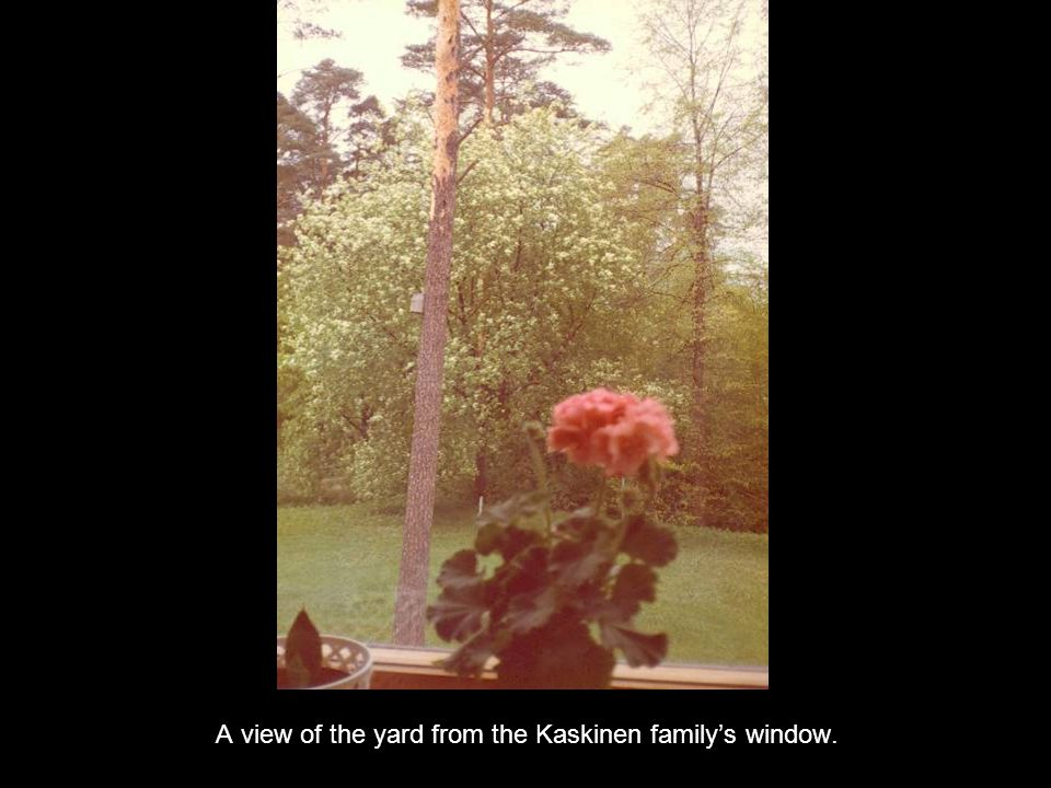A view of the yard from the Kaskinen familys window.