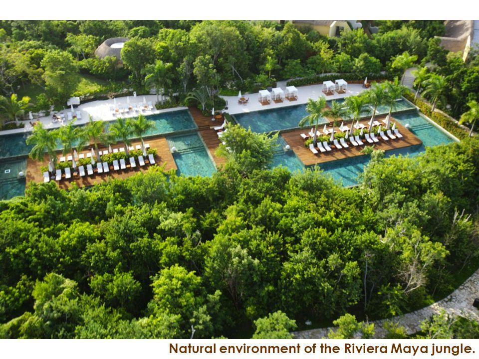 Natural environment of the Riviera Maya jungle.