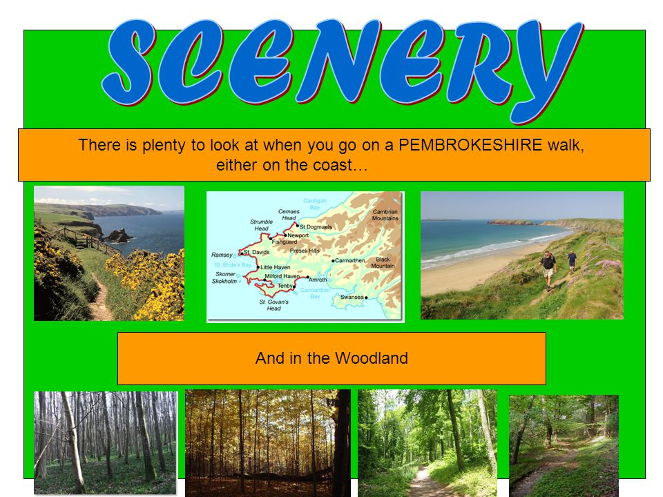 There is plenty to look at when you go on a PEMBROKESHIRE walk, either on the coast… And in the Woodland