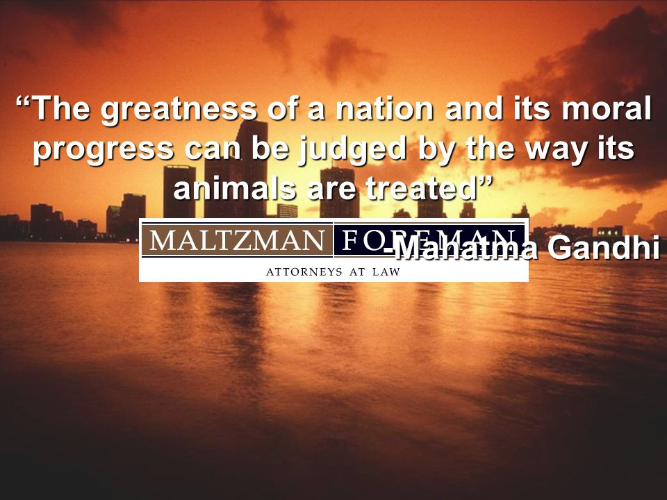 The greatness of a nation and its moral progress can be judged by the way its animals are treated -Mahatma Gandhi