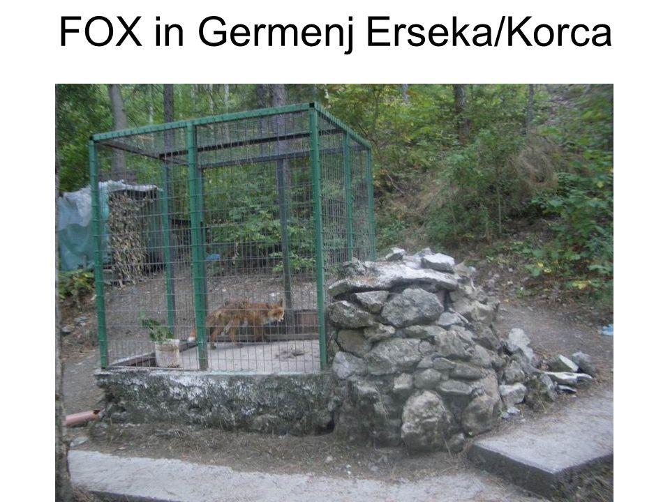 FOX in Germenj Erseka/Korca