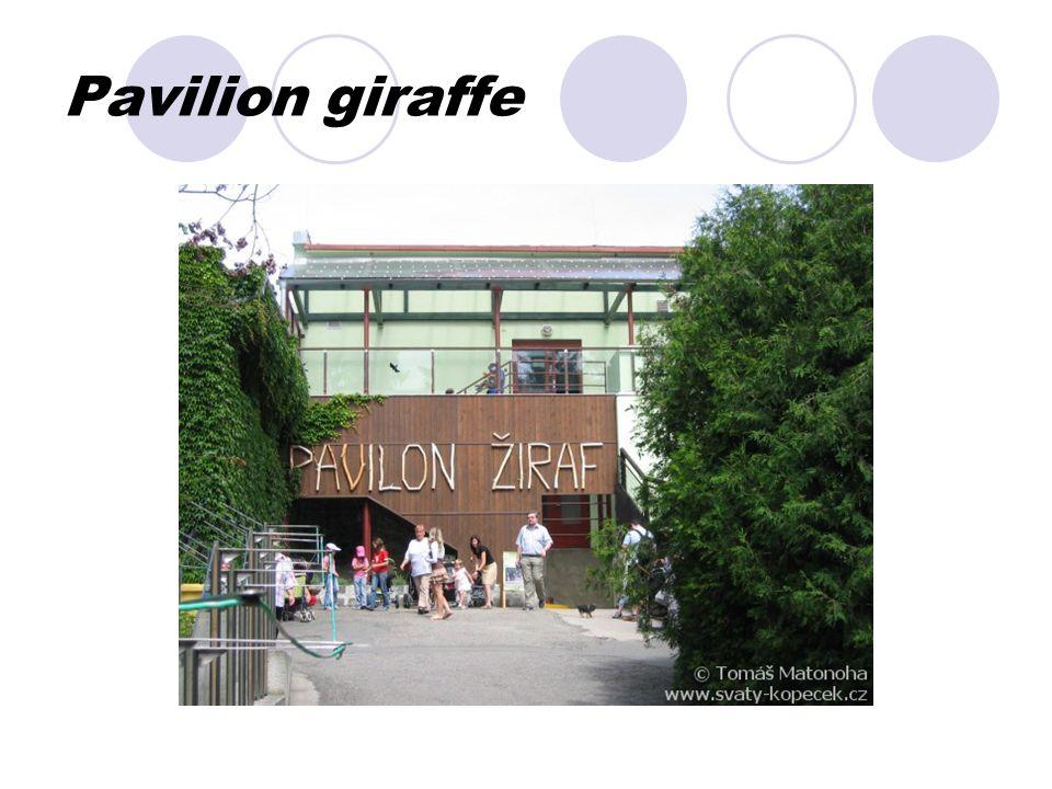 Pavilion giraffe