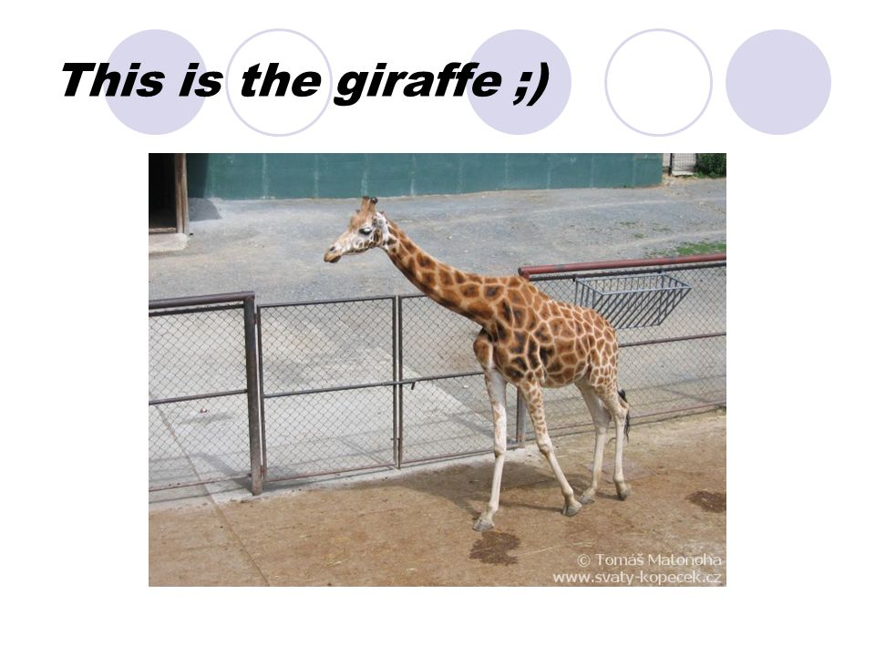 This is the giraffe ;)