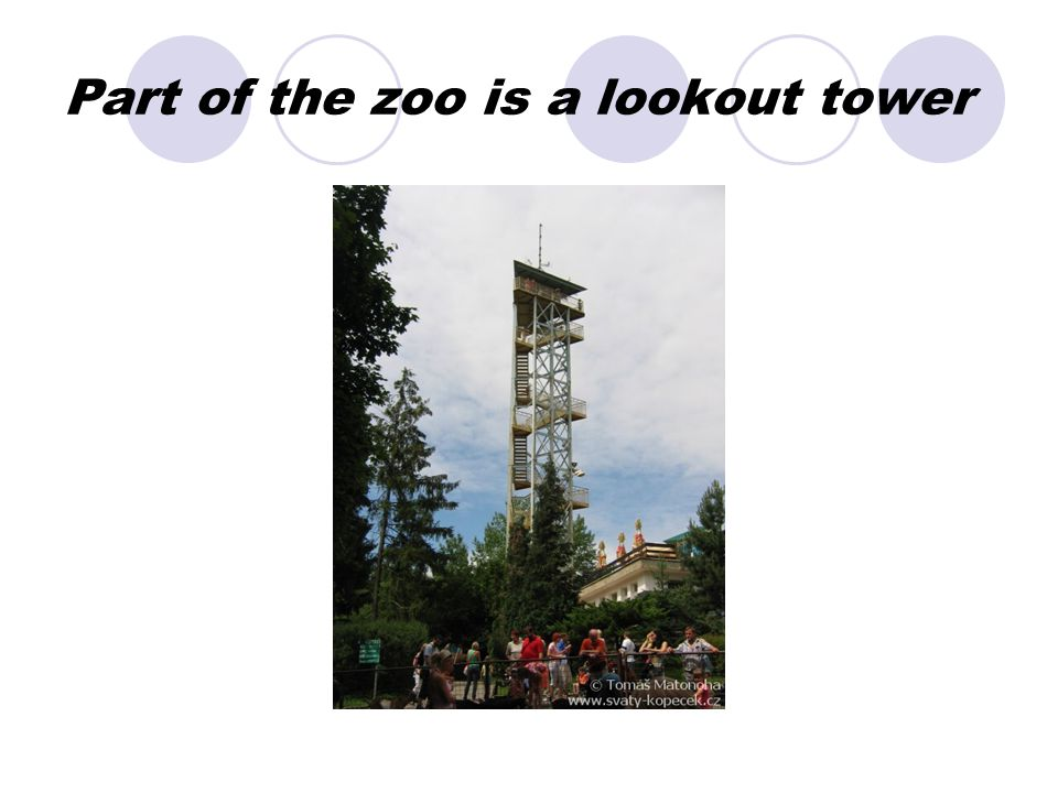 Part of the zoo is a lookout tower