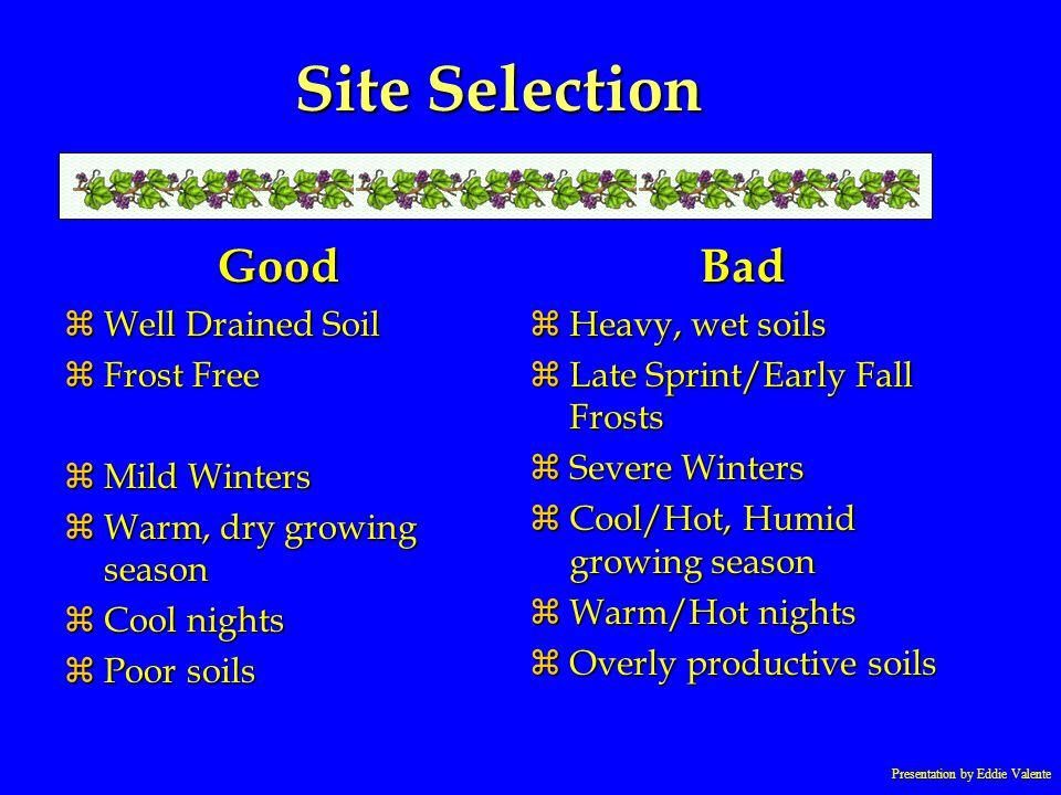 Presentation by Eddie Valente Site Selection Good zWell Drained Soil zFrost Free zMild Winters zWarm, dry growing season zCool nights zPoor soils Bad