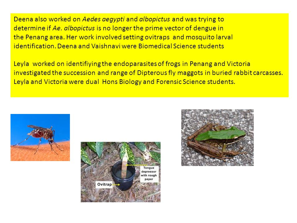 Deena also worked on Aedes aegypti and albopictus and was trying to determine if Ae.