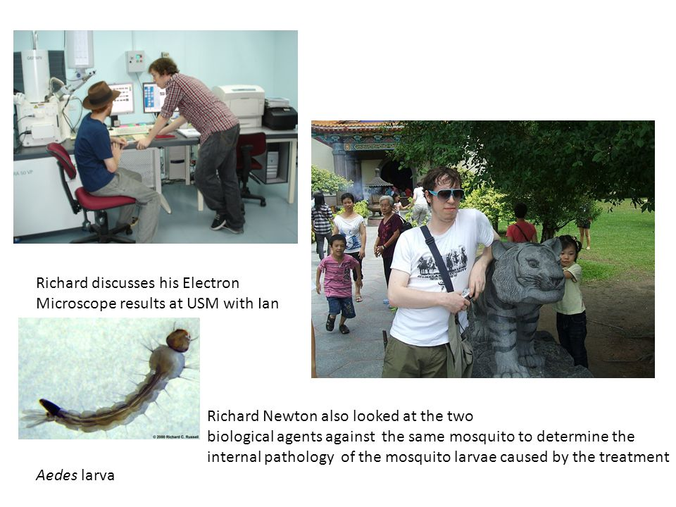 Richard Newton also looked at the two biological agents against the same mosquito to determine the internal pathology of the mosquito larvae caused by the treatment Richard discusses his Electron Microscope results at USM with Ian Aedes larva