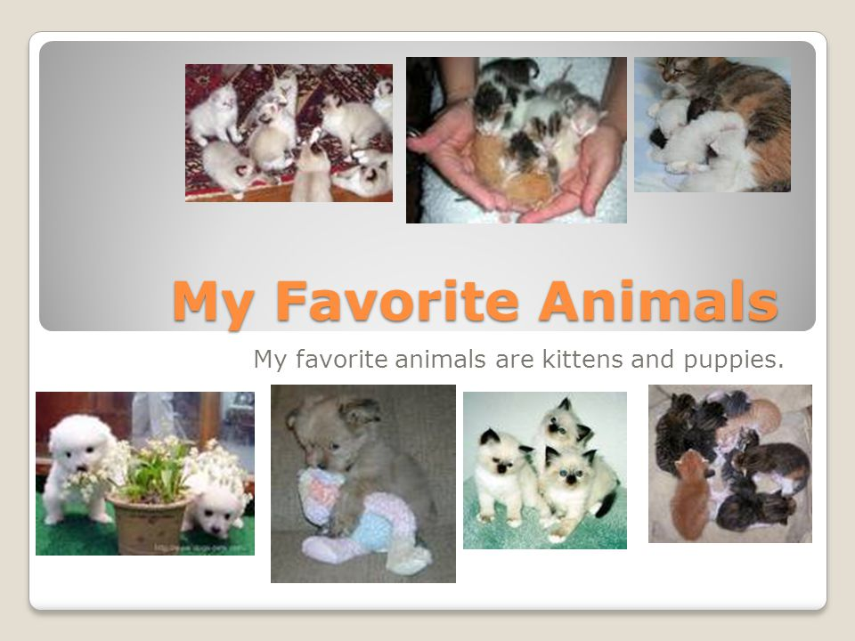 My Favorite Animals My favorite animals are kittens and puppies.