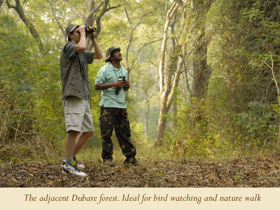 The adjacent Dubare forest. Ideal for bird watching and nature walk