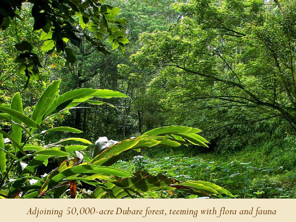 Adjoining 50,000-acre Dubare forest, teeming with flora and fauna