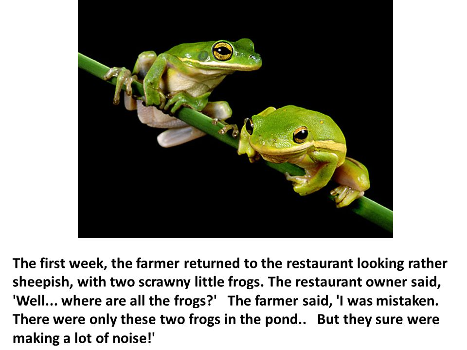 The first week, the farmer returned to the restaurant looking rather sheepish, with two scrawny little frogs.