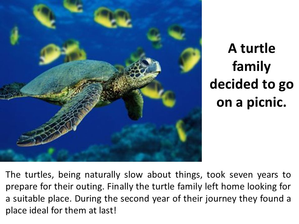 The turtles, being naturally slow about things, took seven years to prepare for their outing.