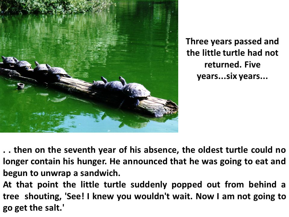 ..then on the seventh year of his absence, the oldest turtle could no longer contain his hunger.