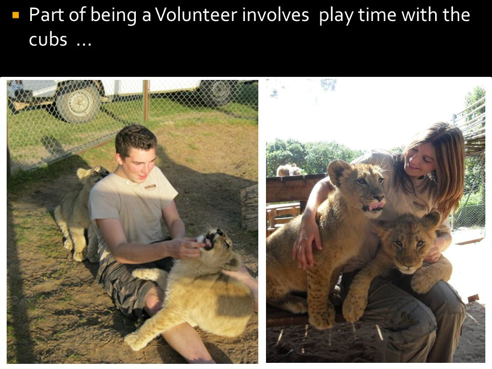 Part of being a Volunteer involves play time with the cubs...