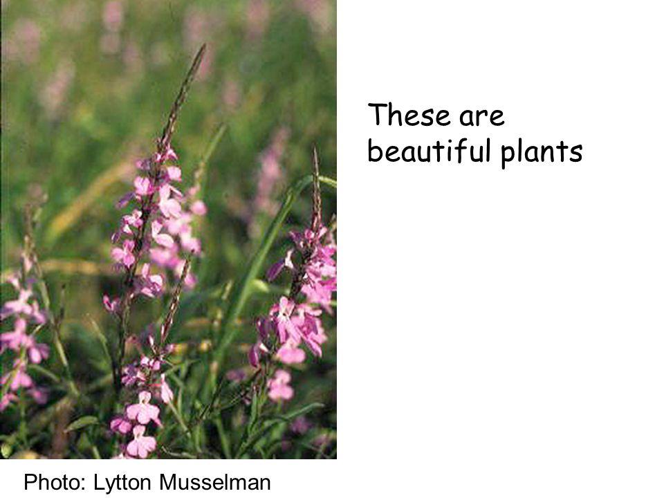 These are beautiful plants Photo: Lytton Musselman