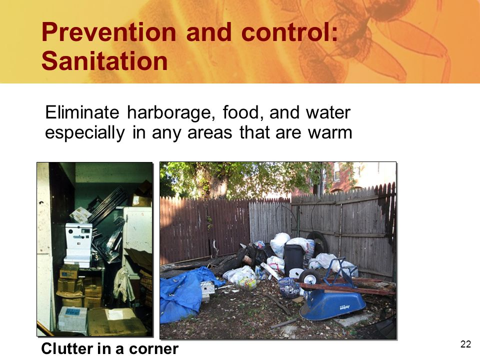 22 Eliminate harborage, food, and water especially in any areas that are warm Prevention and control: Sanitation Clutter in a corner