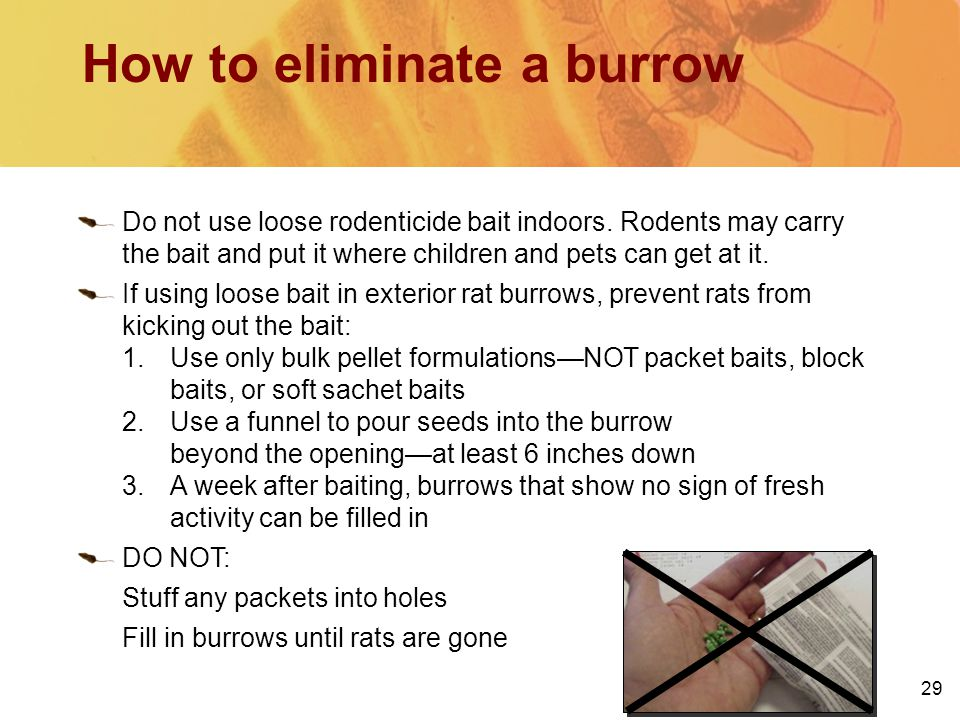 29 How to eliminate a burrow Do not use loose rodenticide bait indoors. Rodents may carry the bait and put it where children and pets can get at it. I