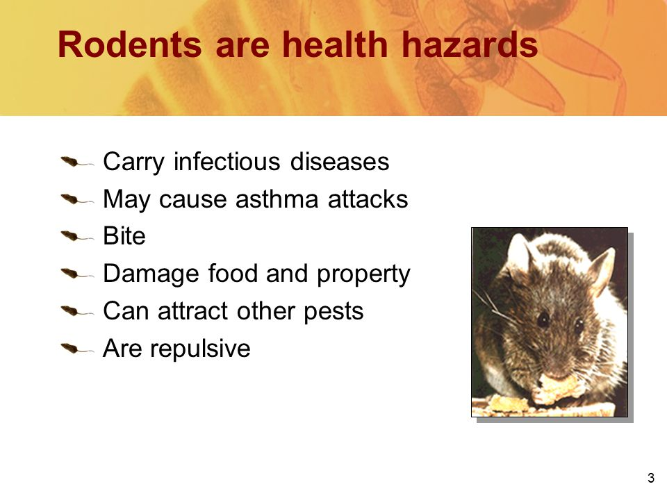 3 Rodents are health hazards Carry infectious diseases May cause asthma attacks Bite Damage food and property Can attract other pests Are repulsive